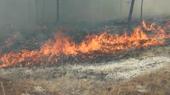 Fire in the wild forest, a huge flamein. - stock footage