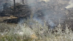 Smoke and scorched earth after a fire in the forest. Soot. - stock footage