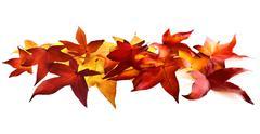 Autumn leaves fallen on white background - stock photo