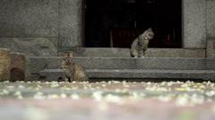 kitties in yard,  flowers falling on ground - stock footage