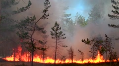 Dangerous Fire fiercely and quickly devours wild forest. Stock Footage