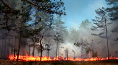 Scenic Fire and thick smoke destroy wild pine forest. - stock footage