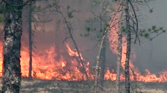 Fire fiercely and quickly devours wild forest in California. Stock Footage