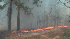 Panorama of the fire tragedy in the woods in California. - stock footage