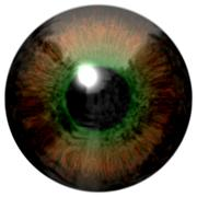 Detail of eye with brown colored iris and black pupil - stock illustration
