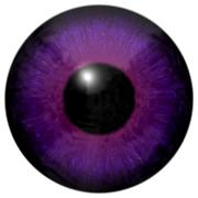 Stock Illustration of Detail of eye with purple colored iris and black pupil