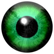 Detail of eye with light green colored iris and black pupil - stock illustration