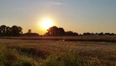 Harvested Field at Sunset Stock Footage