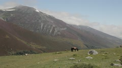 Country landscape mountains covered in heather and snow. Horses grazing grass Stock Footage
