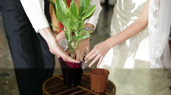 Newlyweds Planting Flovers Stock Footage