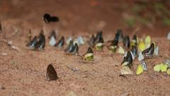 Group of  butterfly on the ground Stock Footage