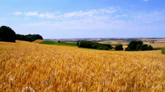 Stock Video Footage of Landscape of ripe wheat