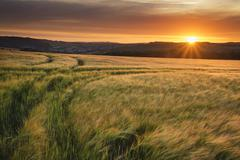 Beautiful Summer vibrant sunset landscape over agricultural crop fields Stock Photos