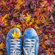 Autumn season in hipster style shoes Stock Photos