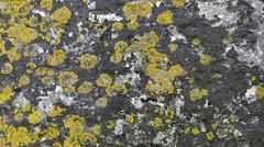 Texture lichen old stone Wall Stock Photos