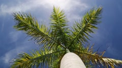a palm tree, the palm leaves blowing in the wind - stock footage