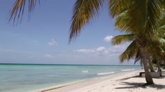 natural beach with palm trees - stock footage