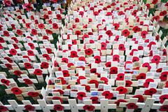 Remembrance day display in Westminster Abbey.. Kuvituskuvat