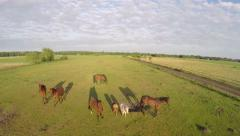 Aerial drone in front of horses startled from sound and then running away Stock Footage