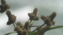 Unusual plant sea out of focus - stock footage