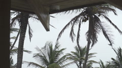 Water spout focus on coconut trees Stock Footage