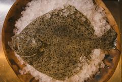 Flounder raw fish Stock Photos