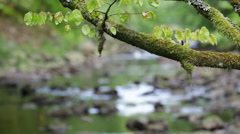 Green Branch And Stream In Nature Stock Footage