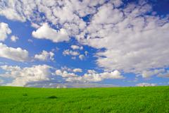 landscape with green grass and cloudy sky - stock photo