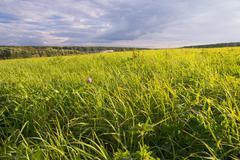Idyllic rural landscape Stock Photos