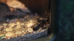 ground beetles - stock footage