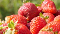Red strawberry background tasty fruit slow tilting 4K 3840X2160 UltraHD video Stock Footage