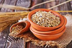 oat grain - stock photo