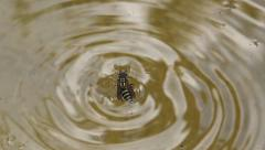 Stock Video Footage of Wasp Drowning in Water