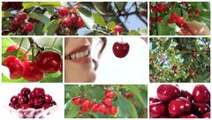 Collage including nice woman eating cherry and cherry trees Stock Footage