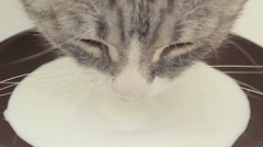 Muzzle Cat Who Drinks Milk From A Saucer Stock Footage
