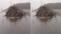 Beaver Dam in Monument Lake 3D Stock Footage