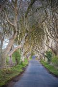 Stock Photo of The Dark Hedges in Northern Ireland, beech tree avenue, Northern Ireland, United