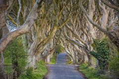 The Dark Hedges in Northern Ireland, beech tree avenue, Northern Ireland, United Stock Photos