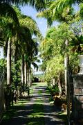 Stock Photo of Nevis Botanical Garden, Nevis, St. Kitts and Nevis, Leeward Islands, West