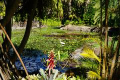 Nevis Botanical Garden, Nevis, St. Kitts and Nevis, Leeward Islands, West Stock Photos