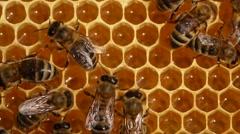 Bees convert nectar into honey Stock Footage