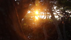 Sunrise Through Trees - stock footage