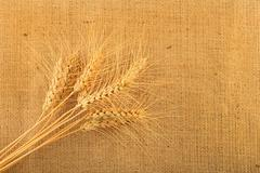 Jute canvas with nine wheat ears Stock Photos