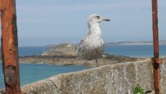 Sea and gull on the balcony near Saint-Malo town in Bretagne France 4K  Stock Footage