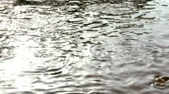 Fresh water fish being fed in a pond with dark water Stock Footage
