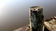 Old Pier post on a lake or river Stock Footage