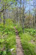 Appalachian Trail in Spring - stock photo