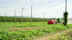 Red truck driving through a hop farm Stock Footage