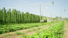 Truck hauling harvested hops - stock footage