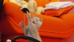 Kitten playing with a toy mouse Stock Footage